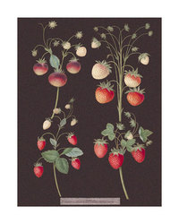 Ripening_berries_1